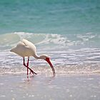 white ibis by Mark de Jong