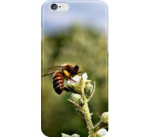 Bee on Flower iPhone Case/Skin