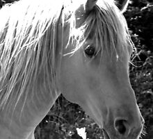 Horse in Black & White by Carlos Megino