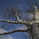 Morning Tree by cookarelli