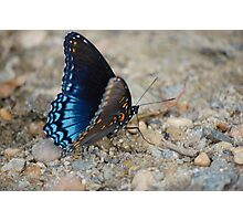 butter butter fly!! Photographic Print