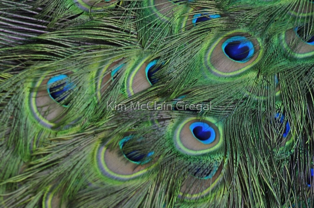 Peacock Feathers, As Is by Kim McClain Gregal