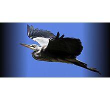 The Grey Heron Photographic Print