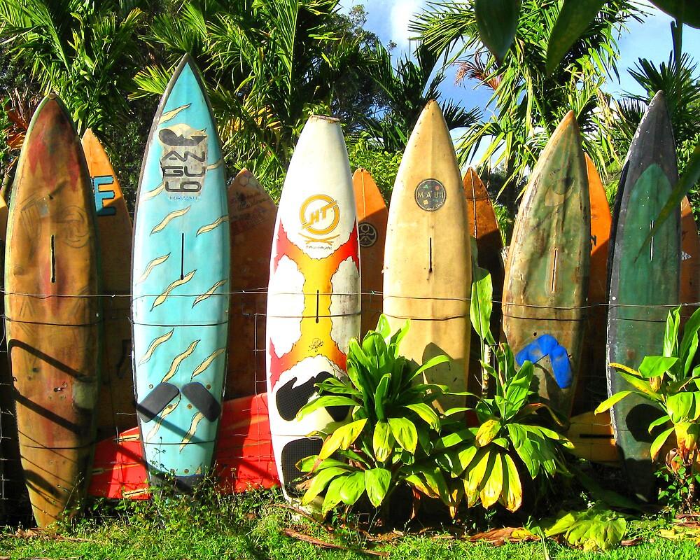 retired surfboards by Marda Bebb