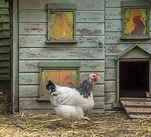 A smart chicken house by Judi Lion