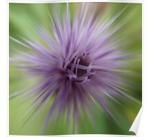 Thistle star Poster