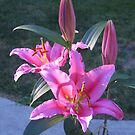 Acapulco Lilies by Pat Yager