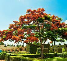 Red flowering tree by Benjamin Gelman