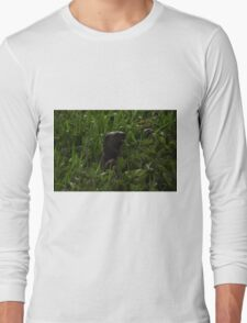 I Otter be in Pictures Long Sleeve T-Shirt