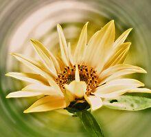 ~ Sunny ~ by Brenda Boisvert