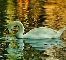 Floating on Golden Lake by Linda Cutche