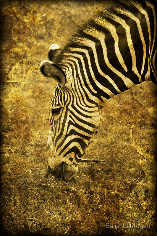 Golden Zebra  by Saija  Lehtonen
