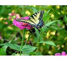 Garden's Delight Photographic Print