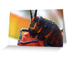 Beautiful Grasshopper Greeting Card