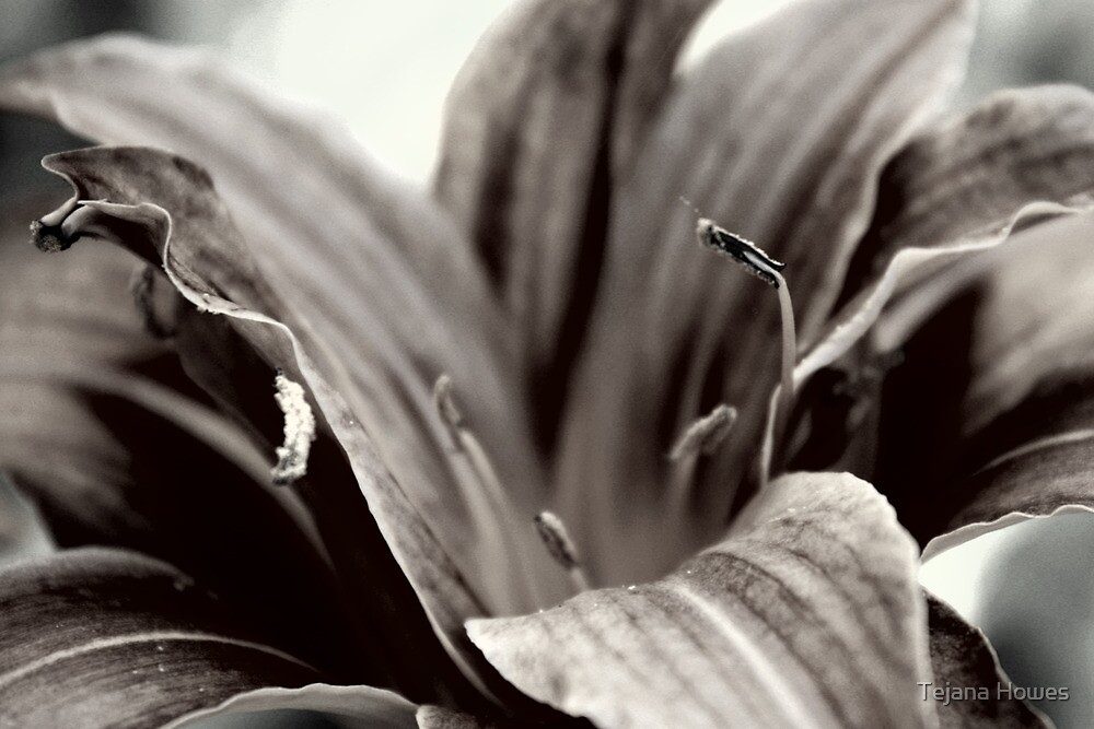 Lily - Victoria, BC by Tejana Howes