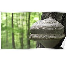 Tree Fungus or badly driven tiny space ship Poster