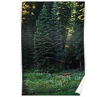 Hugging in the Meadow of Sequoia Poster