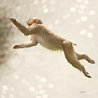 Monkey Jump by peaky40