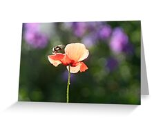 Bumble bee and poppy Greeting Card