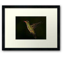 Gilded Hummingbird Framed Print