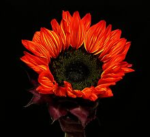 Flaming Flower by Judy Vincent