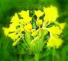 Springtime by na320