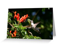 Hummers Love Honeysuckle Greeting Card