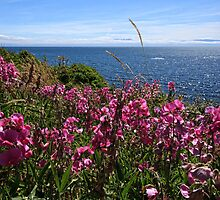 Snapdragons by Anne McKinnell