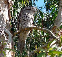 Well Camouflaged, But Seen by stevealder