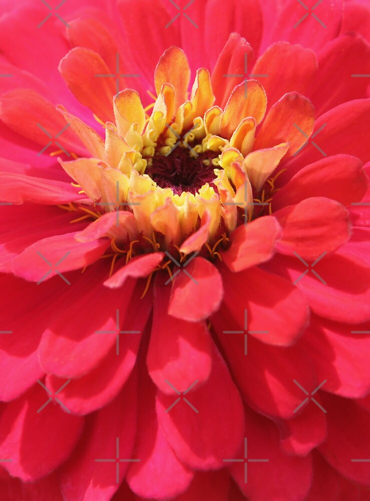Flower closeup by Olga Altunina
