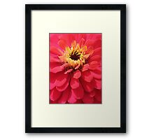 Flower closeup Framed Print