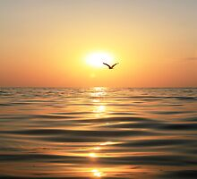 Sea, sunset and seagull by Olga Altunina