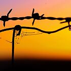 Along the wire.. in dew time.. by kurrawinya