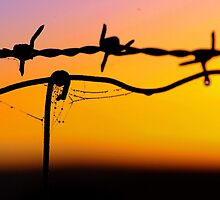 Along the wire.. in dew time.. by Penny Kittel