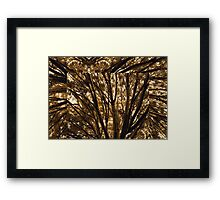 Abstracted Composition With Branches and Trees – August 14, 2010 Framed Print