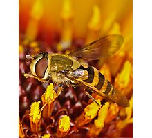 Vibrant Hoverfly Photographic Print