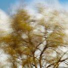 Wind #1 by farmboy