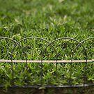 Garden Border by farmboy
