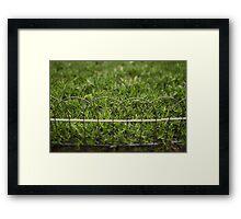 Garden Border Framed Print