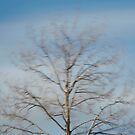 Wind #2 by farmboy