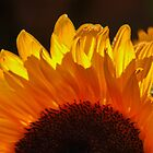 Yellow Sunflower, Our Only SUNSHINE !!!! by AnnDixon