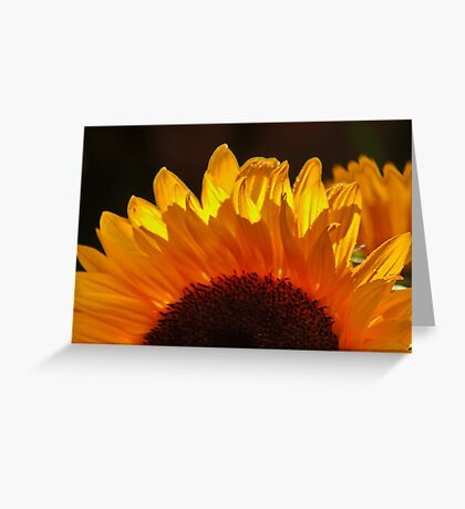 Yellow Sunflower, Our Only SUNSHINE !!!! Greeting Card