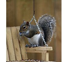 This Swing is for me, right? Photographic Print