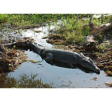 Sunning Saltwater Crocodile Photographic Print