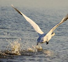 Ready for take off..... by DutchLumix