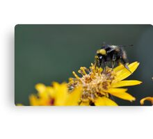 Bumble landing Canvas Print