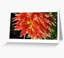 Dahlia in Butchart Gardens Victoria, Canada Greeting Card