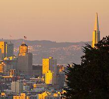 SF Skyline by fitch
