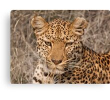 Leopard in your face Canvas Print