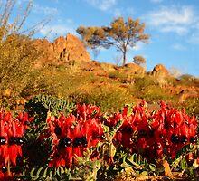 Sturt's Desert Pea by Paula McManus